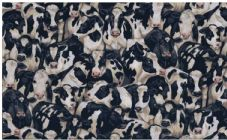 Makower fabric Crowded Cows 425 100% cotton